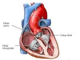 katup jantung lemah